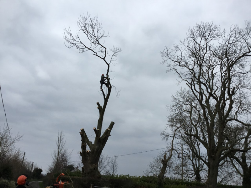 Castleview Tree Surgeon Charleville
