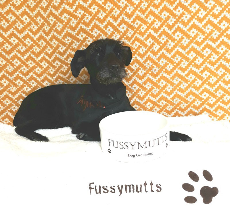 Fussy Mutts - Dog Grooming Offaly and Westmeath