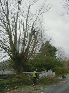 thumb_tree_pruning_tipperary