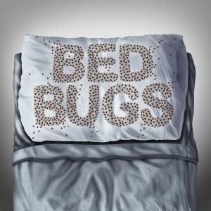 thumb_bigstock-Bed-Bugs-On-Pillow-102331772
